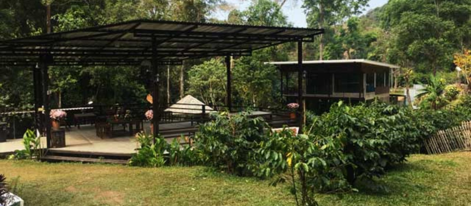 Cafeタイ夢 Thailand's Coffee Farm
