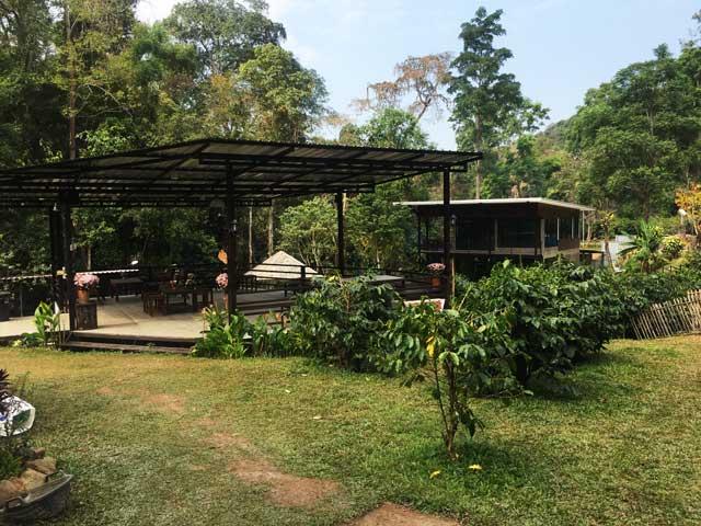Cafeタイ夢 Thailand's Coffee Farm